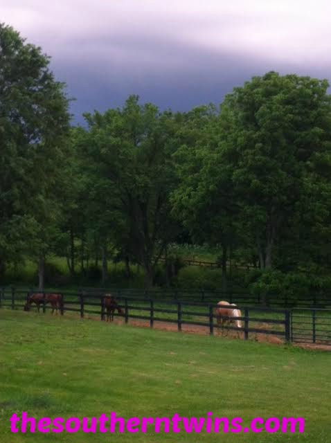 Horses enjoying the cool summer showers