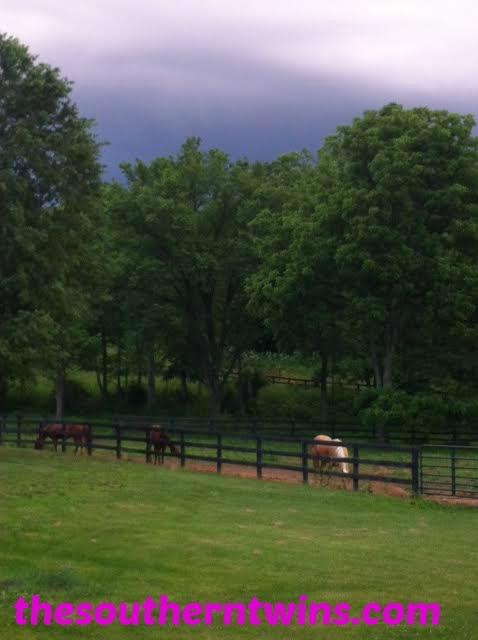 Horses enjoying the cool summer showers