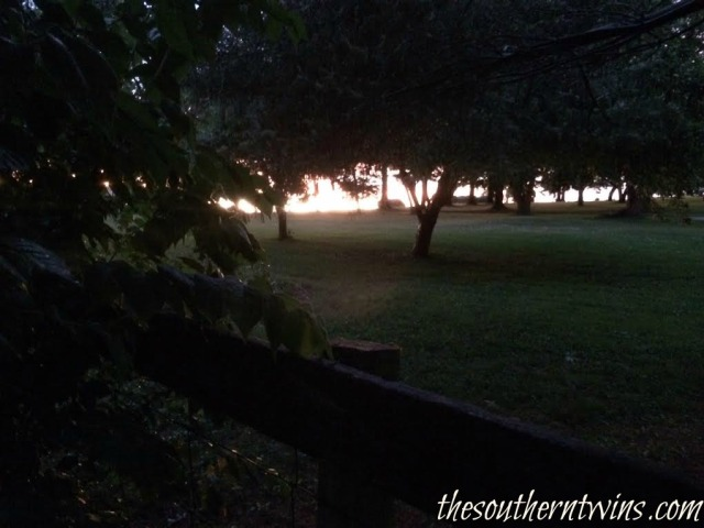 The light between the trees at TwinBay Farm